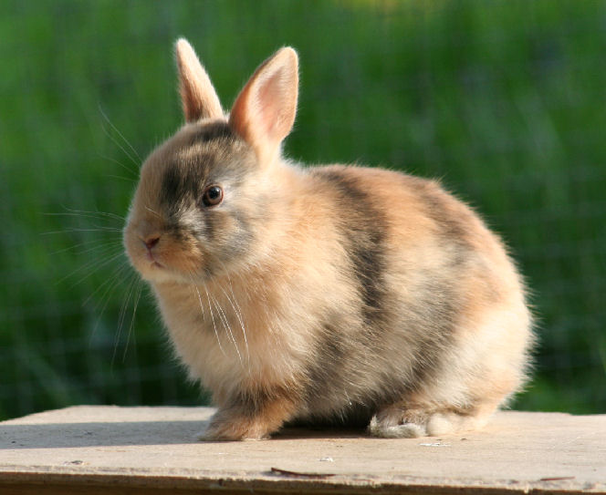 Tierärztliche Gemeinschaftspraxis Göpner Schroth Durchfall Beim